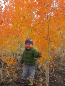 Logan enjoying the Fall foliage along the Loop Road