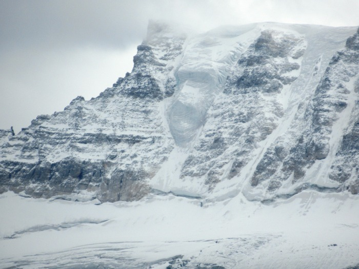 IMG_3414 Mt Fay Gorilla